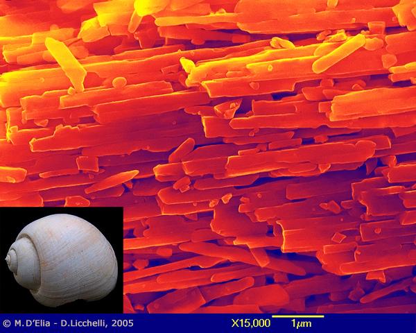 Visione in falsi colori al microscopio elettronico a scansione, della struttura ordinata dei cristalli di Carbonato di Calcio